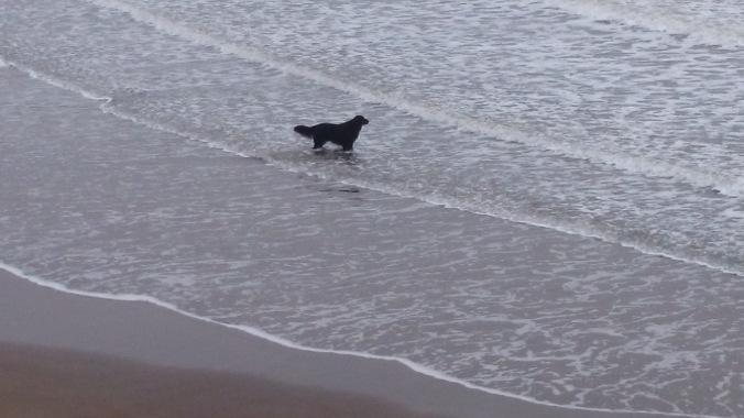 Whitby dracula black dog
