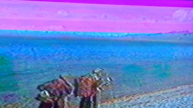 DSC_0685
